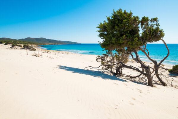 Sardinien Strand Baum
