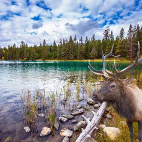 Kanada: 14 Tage Vancouver & Vancouver Island inkl. 3* Hotels & Flug nur 703€