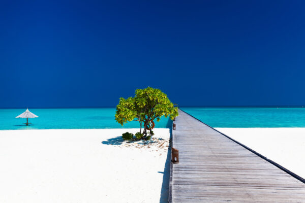 Malediven Baum am Strand