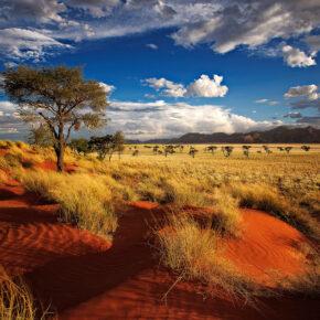 Afrika Namibia Landschaft Steppe