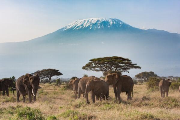 Afrika Tansania Elefanten Berg