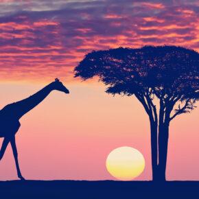 Abenteuer Tansania: 7 Tage Glamping mit Vollpension, Safari, Flug, Tranfers & mehr ab 1509€