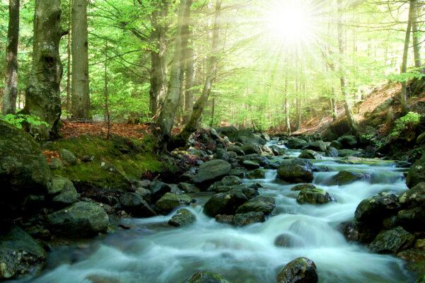 Deutschland Bayerischer Wald Bach