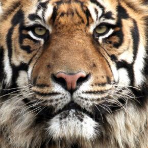 Zoo Wilhelma + Städtetrip Stuttgart: 2 Tage im TOP 3* Hotel mit Zoo-Eintritt & Frühstück ab 49€
