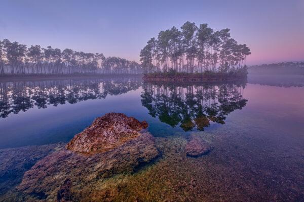 USA Everglades Spiegelung