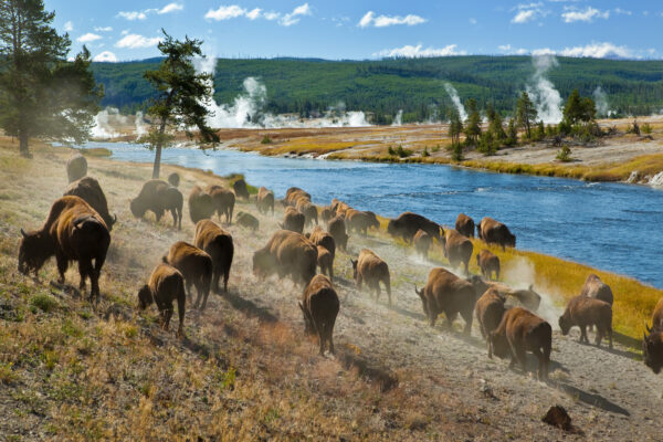 USA Wyoming Yellowstone National Park