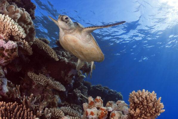 Karibik Bonaire Schildkröte