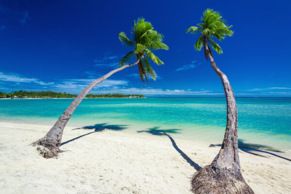 Fidschi Inseln Palmen