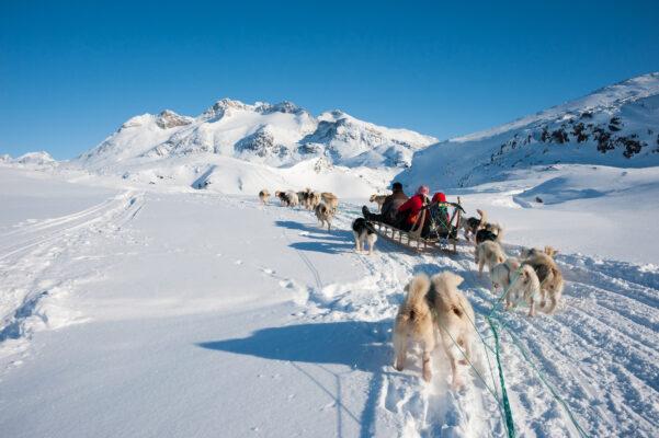 Grönland Hundeschlitten