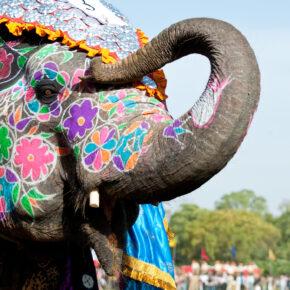 Indien Elefant