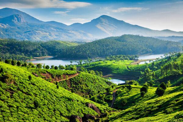 Indien Landschaft Teeplantagen