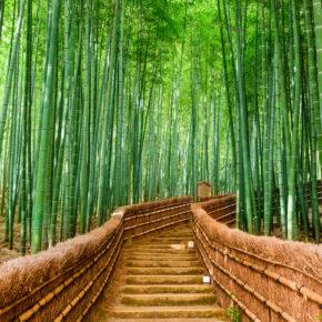 Auf Entdeckungstour durch den Bamboo Forest