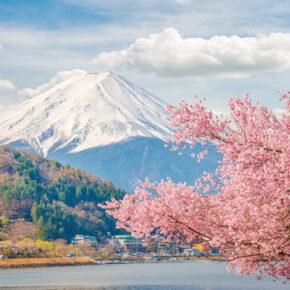 Japan Mount Fuji Baum