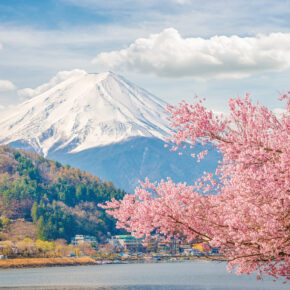 Pink Carpet in Japan: 800.000 Blumen am Fuße des Mount Fuji