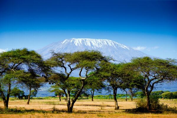 Kenia Bäume
