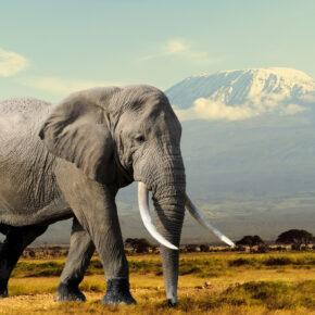 Afrika: 15 Tage Kenia mit guter Strandunterkunft und Condor Flug nur 527€
