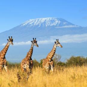Hin- und Rückflüge nach Kenia mit Gepäck nur 329 €