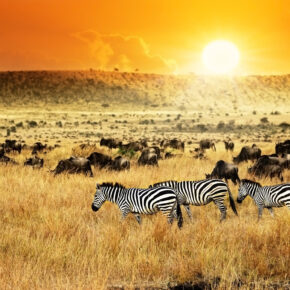 Lastminute Flug-Schnäppchen-Alarm: Hin- und Rückflüge nach Kenia nur 200€