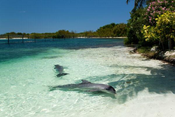 Kuba Varadero Delfin