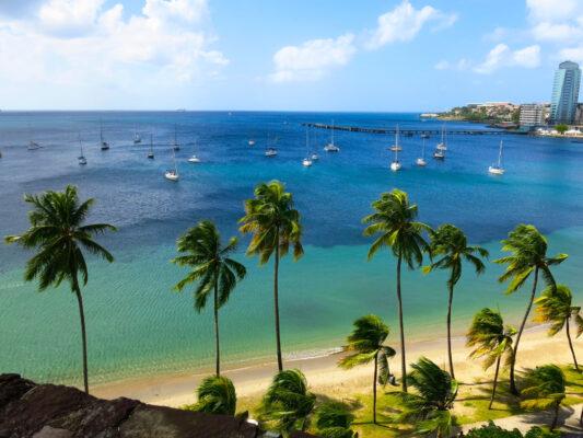 Martinique Strand Palmen