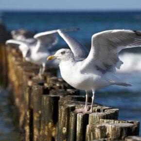 Polnische Ostsee: 3 Tage im 3* Strandresort mit Halbpension & Wellness nur 69€