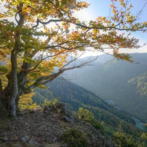 Wochenende im Schwarzwald: 3 Tage im 4* Hotel mit Frühstück, 5-Gänge-Dinner & Wellness nur 149€