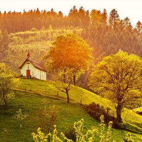 Die 5 schönsten Weinregionen in Deutschland