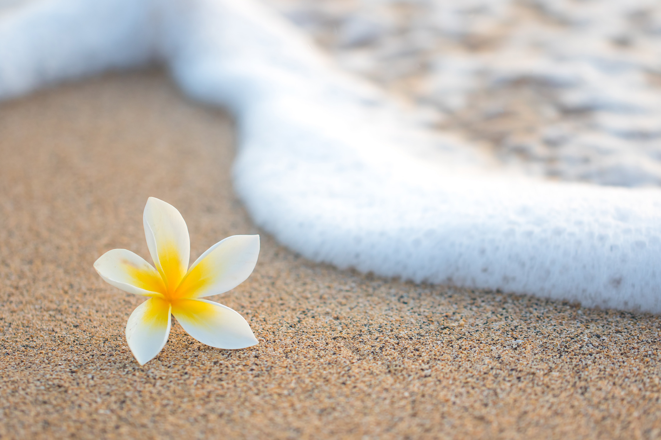 hawaii blume strand meer urlaubsschn ppchen und tolle reise angebote. Black Bedroom Furniture Sets. Home Design Ideas