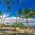 Samoa Palmen