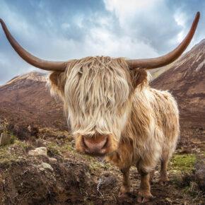 Wochenendtrip Schottland: 3 Tage Glasgow im TOP 3.5* Hotel mit Flug nur 94€