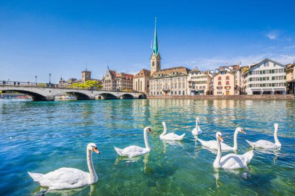 Schweiz Zürich Schwäne