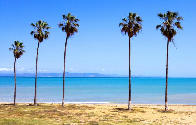 Tunesien Palmen