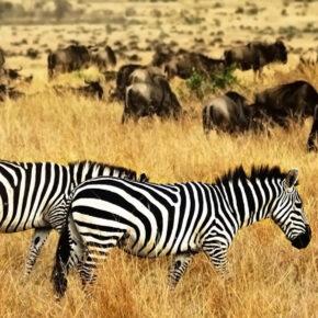 Das ferne Paradies: 19 Tage Kenia mit guter Strandunterkunft und Condor Flug nur 377€