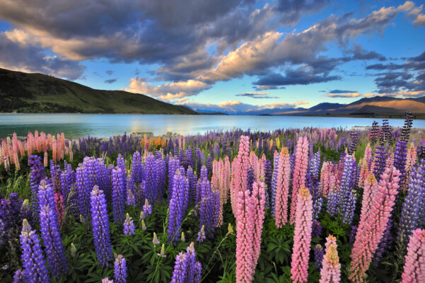 Beste Reisezeit für Neuseeland