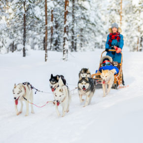 Huskysafari in Skandinavien: Tipps & Infos für eine Hundeschlittentour