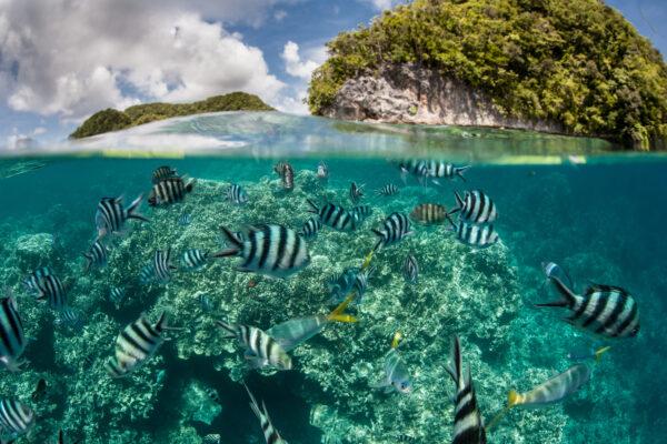 Palau Meer
