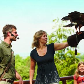 Familienspaß: 2 Tage im Baumhaus im Natur-Resort Tripsdrill mit Frühstück & Wildparadies ab 69€