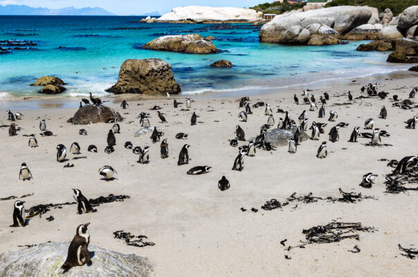 Afrika Kapstadt Pinguine