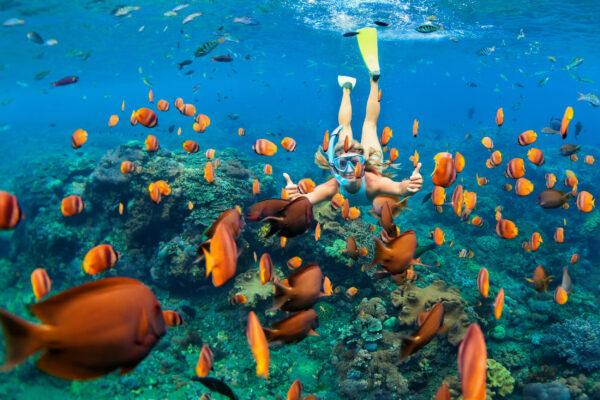 Bahamas Schnorcheln