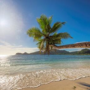 Lastminute: Extrem günstige Direktflüge nach Jamaika nur 94€
