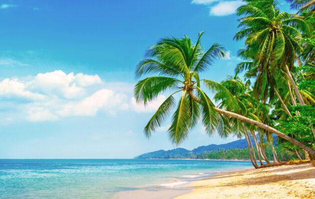Malediven Palmen