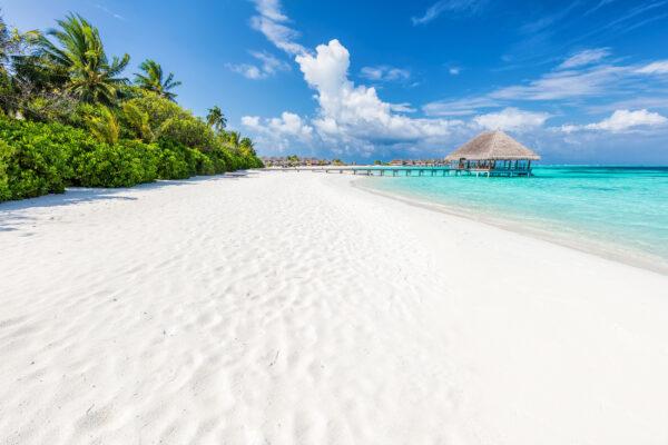 Malediven Palmen Strand