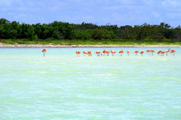 Mexiko Holbox Flamingos Wasser