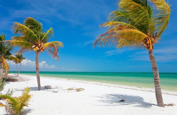 Mexiko Holbox Palmen