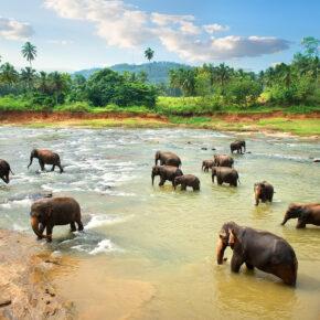 Sri Lanka: 14 Tage mit Flug & guter Unterkunft nur 405€
