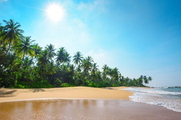 Sri Lanka Palmenstrand