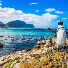 Südafrika Kaptstadt Pinguin