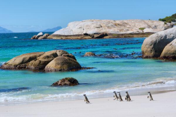 Südafrika Kaptstadt Pinguin Strand