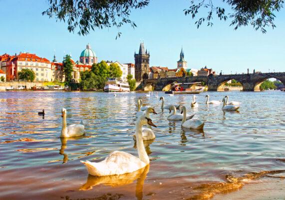 Tschechien Prag Schwäne