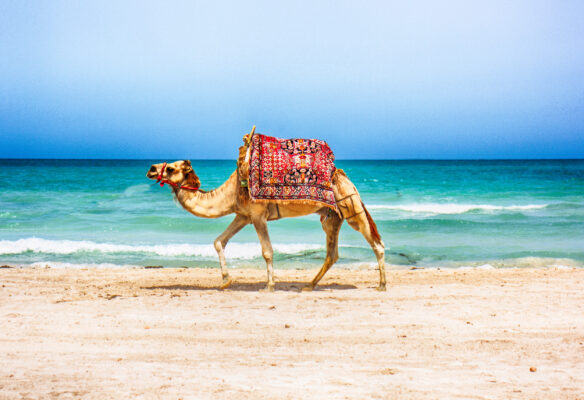 Tunesien Strand Kamel